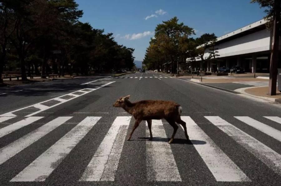 Animales más seguros en las carreteras italianas