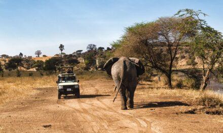 De safari en Tanzania