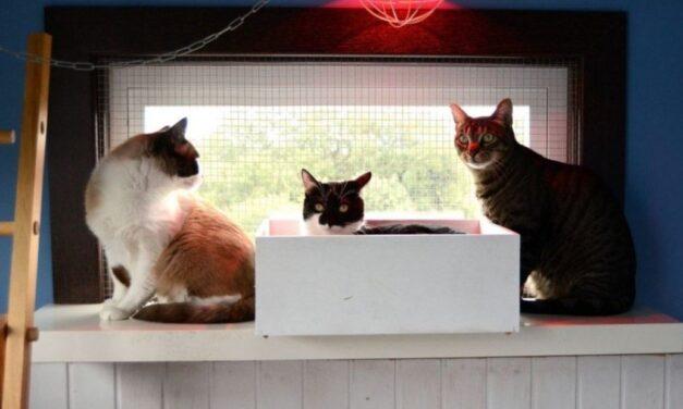 Gatosphera, un hotel sólo para gatos