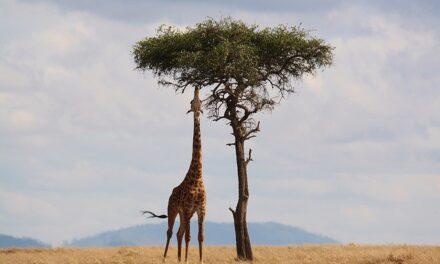 Kenia, destino preferido en África