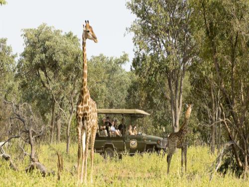 Oferta de safari por Sudáfrica