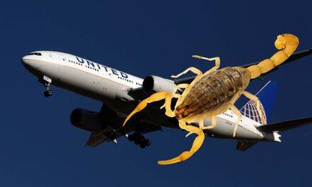 Un escorpión pica a una pasajera en pleno vuelo