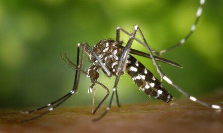 Cuáles son los mejores repelentes de mosquitos
